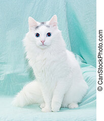 White fluffy cat with blue eyes sitting on pale green background