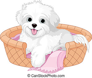 White fluffy dog - White fluffy dog resting in dog bed