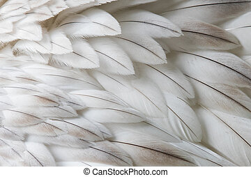 White fluffy feather closeup - Selective focus on some...