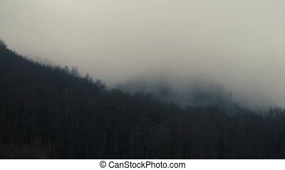 Smog Is Rolling Around From The Thicket - White Fog Or Smog...