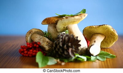 white forest mushroom - white forest natural mushrooms on a...