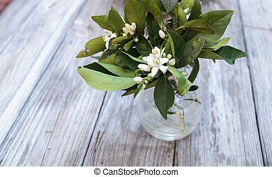 White fragrant orange blossom blooms in a glass vase on ...