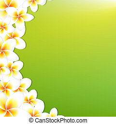 White Frangipani Border With Green Background