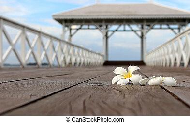 White frangipani flower, plumeria flower on the wood bridge