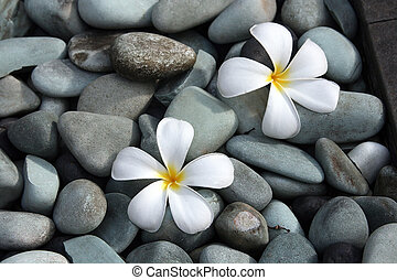 White frangipani flowers on pebbles