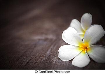 white frangipani flowers on wooden