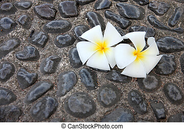 White frangipani on decorative stones background.