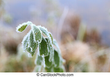 White frost on green leaves