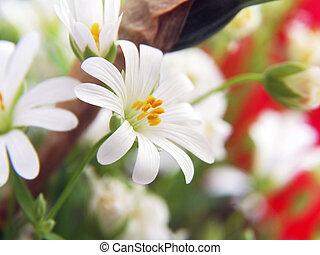 White Garden Flowers in a Vase