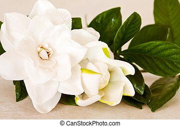 White Gardenia Blossom on Marble Background