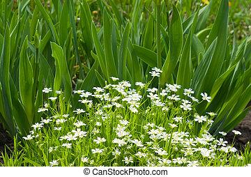 White gentle flowers