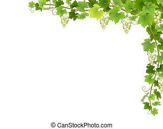 White grape branch in corner