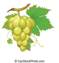 White grape cluster with green leaves isolated