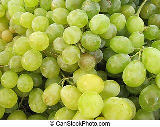 White grape harvest.