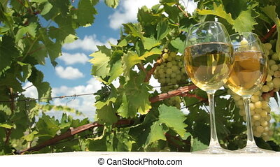 White Grapes and Wine - Two glasses of white wine and bunch...