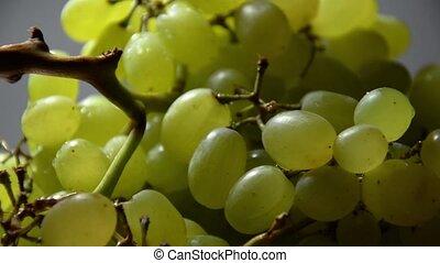 White grapes close-up shot.