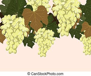 White grapes cluster