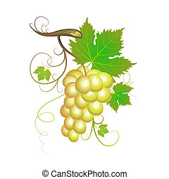 White grapes with green leaves isolated on white