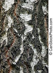 white gray texture from dry bark of a birch tree