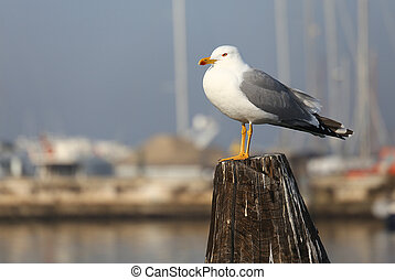 white Gull over the pole to moor ships on the sea