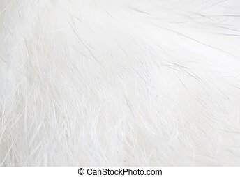 White hair on the cat as background