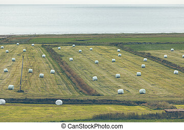 White Hay Rolls on a Green Field of Iceland