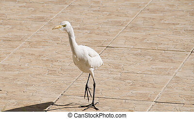White heron in the tiles
