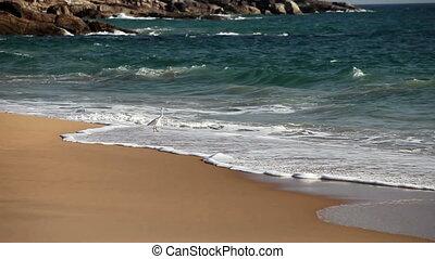 White heron on  sandy seashore in a surf