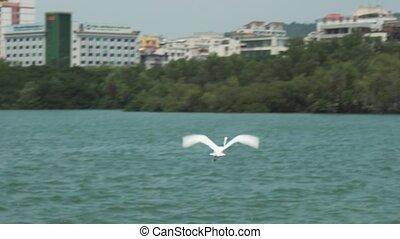 White heron on Sanya river embankment stock footage video