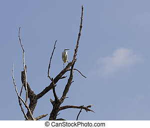 white heron on tree