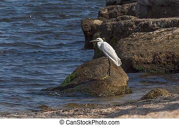 white heron standing on stone
