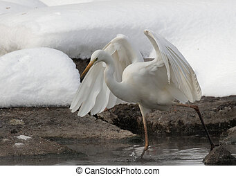 White Heron Ukraine 2018