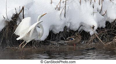 White Heron Ukraine