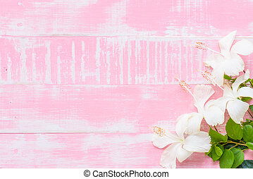 White Hibiscus rosa sinensis Flowers on a pastel bright pink...
