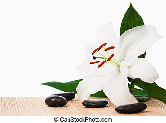 White hibiscus surrounded by black stones
