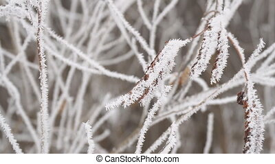 Hoarfrost on the thin twigs - White Hoarfrost on the thin ...