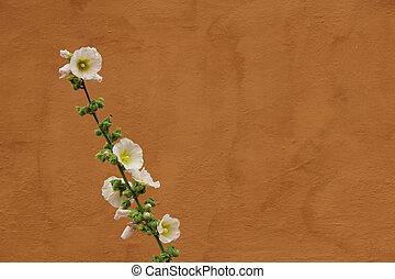 White Hollyhock against orange wall