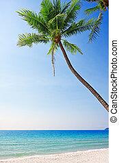 white homok, tengerpart, noha, pálma, fa.