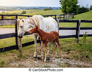 White horse and her colt