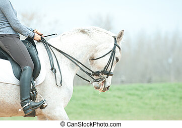 White horse and rider