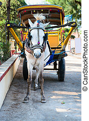 White horse and traditional tourist carriage