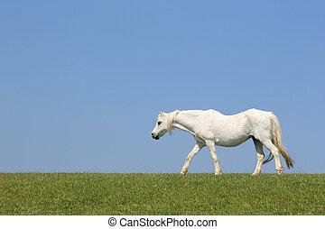 White Horse Beauty