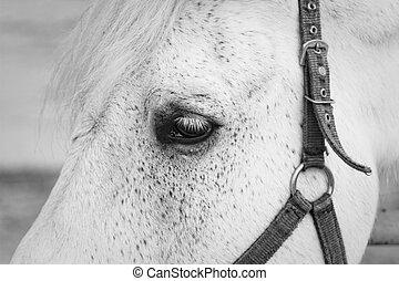 White horse eye closeup shot.