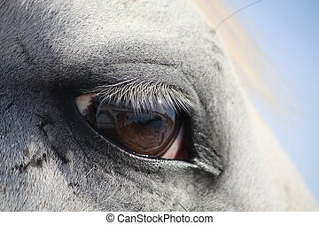 White horse eye - Beautiful white horse eye close up