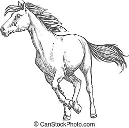 White horse freely running sketch portrait - White horse...