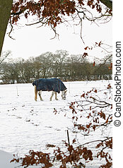 White Horse Grazing in Snow