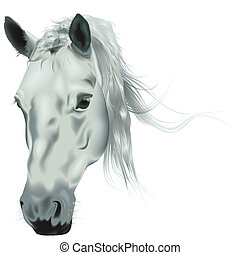 White Horse Head - Colored Realistic Illustration, Vector