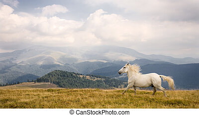 White horse in a beautiful landscape