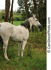 White Horse in a Meadow