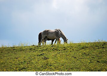 White horse in front of brown horse